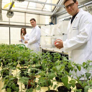 Większa odporność roślin? Mamy na to patent!