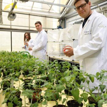 Induktory odporności roślin